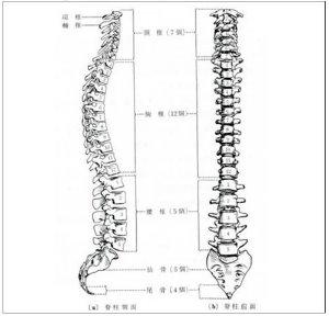 脊椎001.jpg
